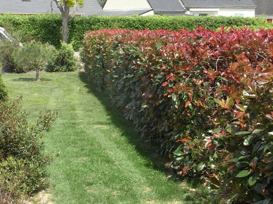 Tailles de haies breiz paysage paysagiste muzillac for Conception de jardin dans le paysage